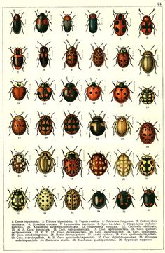 Insects Field Guide Art Print In Insects Bug Art - Insects Field Guide Art Print Visit Insects Field Guide Art Print Insect Art Nature Prints Art Prints Mantis Tattoo Cicada Tattoo Insect Tattoo Types Of Bugs Watercolor Paintings Watercolour M Illustration Botanique, Illustration Art, Vintage Illustrations, Flora Und Fauna, Insect Art, Beautiful Bugs, Bugs And Insects, Antique Prints, Botanical Prints
