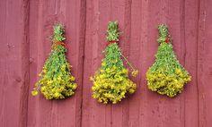 Surprising Herb May Help Restless Leg Syndrome