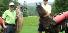 Llama Caddy — Getaways for Grownups Golf Bags, Activities