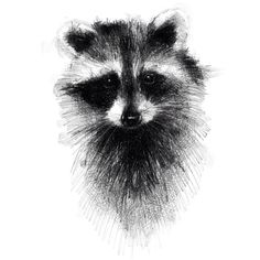 Raccoon, one of my drawings that I sketch every day prints . - Raccoon, one of my drawings that I sketch every day prints avail …, - Art Drawings For Kids, 3d Drawings, Art Drawings Sketches Simple, Animal Sketches, Animal Drawings, Sketch Drawing, Drawing Ideas, Drawing Animals, Sketching