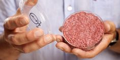Test-tube burger. EDITORIAL USE ONLYA lab-grown meat burger made from Cultured Beef, which has been developed by Professor Mark Post of Maastricht University in the Netherlands. Issue date: Monday August 5, 2013. Cultured Beef could help solve the coming food crisis and combat climate change. Photo credit should read: David Parry/PA Wire URN:17243372