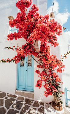 Our guide to Paros Island in the Cyclades, Greece. Best towns to stay in, where to eat and go out, what to see, and where to take the best photos. Wallpaper Keren, Flower Wallpaper, Iphone Wallpaper, Wallpaper Wallpapers, Nature Aesthetic, Flower Aesthetic, Image Beautiful, Beautiful Places, Applis Photo