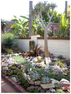 succulent gardening....