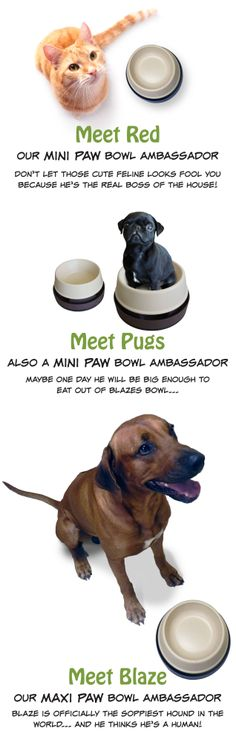 Meet the Antbeater ECO ambassadors. Maybe One Day, Pet Products, Dog Bowls, Pugs, Meet, Pug Dogs, Pug, Pet Supplies, Pug Life