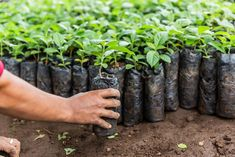 From Seed to Seat. This year we have planted 50,000 trees across our three plantations in Nicaragua. Sustainable Forestry, Sustainability, Seeds, Plants, Mood, Plant, Sustainable Development, Grains, Planting