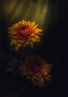 Fotografia Light Of My Life de Paul Barson na 500px