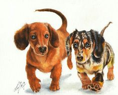 Dachshunds Puppies