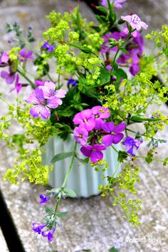 Madelief Ladies Mantle, pink phlox, pink geranium