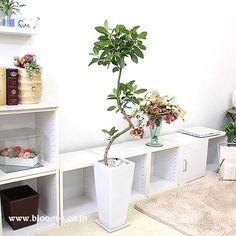 珍しい幹の部分が綺麗なスパイラル仕立てのフランスゴムの木でインテリアとしても目をひきそうです。葉や幹肌、樹形など楽しめ育てやすい観葉植物です。 #観葉植物 #インテリア #plants http://www.bloom-s.co.jp/fs/bloomingscape/g7-france1