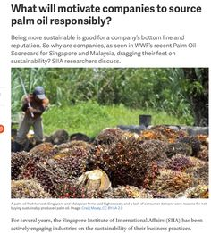 What will motivate companies to source palm oil responsibly?