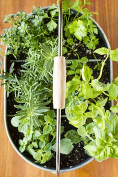 Easy Indoor Herb Garden -- I was an indoor container gardening failure, until I decided a different approach was in order. Find out how you can create this simple DIY indoor herb garden in under 10 minutes! | unsophisticook.com