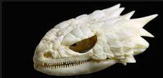 Armadillo lizardSkulls – An Exploration