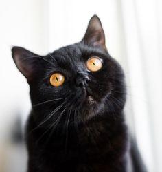 A vermifugação protege seu gatinho contra vermes e as doenças causadas por eles. Gatos que vivem em ambientes fechados também precisam ser vermifugados. Entenda mais!