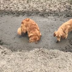 """""""Get a dog"""" they said. """"It'll be fun"""" they said. 😲🐶Funny Dog video, Funny dog images """"Get a dog"""" they said. """"It'll be fun"""" they said. 😲🐶Funny Dog video, Funny dog images,Funny animals """"Get. Funny Dog Images, Dog Quotes Funny, Funny Animal Videos, Cute Funny Animals, Funny Animal Pictures, Cute Baby Animals, Videos Funny, Funny Humor, Funny Dog Fails"""