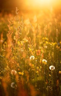 Terre Nature, Foto Macro, Photos Encadrées, Beautiful Places, Beautiful Pictures, Fields Of Gold, Mellow Yellow, Belle Photo, Wild Flowers