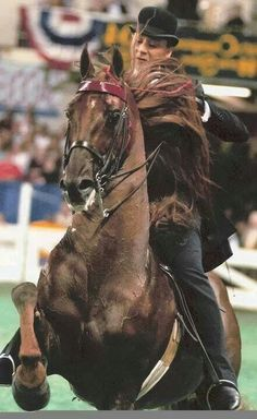 CCV Casey's Final Countdown and Michele Macfarlane. Saddlebreds are the prettiest horses in existence Most Beautiful Animals, Beautiful Horses, Horse Girl, Horse Love, Morgan Horse, American Saddlebred, Appaloosa Horses, All The Pretty Horses, Horse Saddles