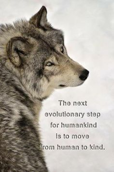 The Next Evolutionary Step For Humankind is to Move From Human to Kind--Wolf Den Shared Cynthia Davies Photo