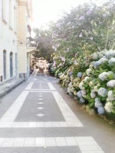 Good morning picture from Santu Lussurgiu, Sardinia