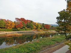 Autumn Kamo river in Kyoto Japan.