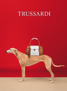 William Wegman Trades In His Weimaraners For Greyhounds In Trussardi's Spring Ad Campaign. - if it's hip, it's here