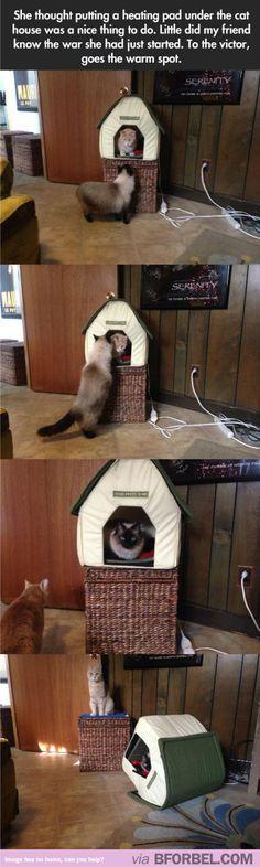 How To Start A Cat W - https://www.soumo.eu/how-to-start-a-cat-w/