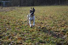 Gårdstunet Hundepensjonat: Sola skinner - dyra koser seg! En deilig fredag!