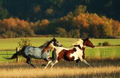 Fall Evening Jaunt   by sagetopaz