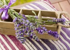 FOUR REASONS TO LOVE LAVENDER