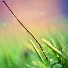 Dew in Grass Free iPad HD Wallpaper » Free iPad HD Wallpaper Water Drops, Rain Drops, Morning Dew, Dew Drops, One Light, Mists, Hd Wallpaper, Grass, Ipad