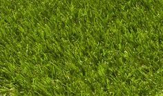 Lazy Signature Lawn
