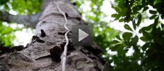 Rainforest Alliance: Discover our mission, our achievements and our passions in an inspiring video.