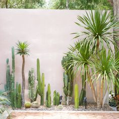 48 Cool Small Cactus Ideas For Home Decoration. The market in cactus house plants is booming and with very good reason. These prickly little guys are great fun, easy to keep and very attractive. Dry Garden, Garden Pool, Cactus House Plants, Cactus Garden Ideas, Outdoor Cactus Garden, Landscape Design, Garden Design, Small Cactus, Garden Inspiration