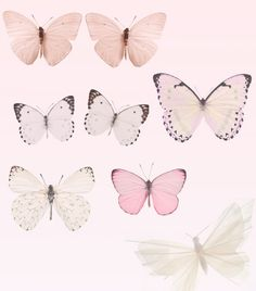 palest pink butterflies #mirabellabeauty #rose #smoke