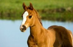 Training young horses, all you need to know:)