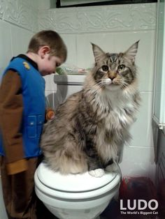 World's Biggest Maine Coon Watches Over His Tiny Brother