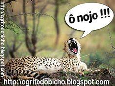 """""""O Grito do Bicho"""": Leopardo que estava somente tentando achar o que c..."""