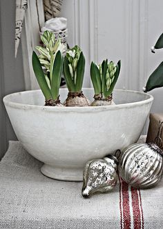 ♥ Hyacinths!  Always for Christmas in my land of youth!