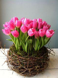 Nido de tulipanes. Con base de musgo y ramitas entretejidas.