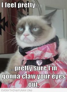 grumpy cat meme picture i feel pretty pretty sure i'm going to claw your eyes out