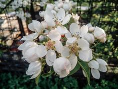 ЦВЕТЫ  #россия #lesagul #russia #flowers #flower #petal #petals #nature #beautiful #love #pretty #plants #blossom #sopretty #spring #summer #flowerstagram #flowersofinstagram #flowerslovers #flowerporn #botanical #floral #florals #insta_pick_blossom #flowermagic #instablooms #bloom #blooms #botanical #floweroftheday