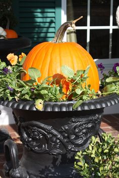 Pansies tucked around pumpkin in black urn.