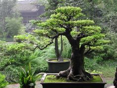 Coolest Trees in the World | top unique bonsai trees