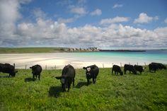 Pierowall, Orkney Islands