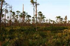 Jonathan Dickinson State Park  Hobe Sound, FL
