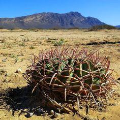 Cacti & Succulents - Community - Google+ Petr Trafina