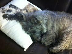 Our cairn terrier's favorite pillow - wonder why - from Pottery Barn.
