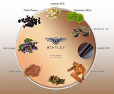 Bentley Intense For Men Notes description Clary Sage, Africa, Notes, Stuffed Peppers, Tableware, Leather, Men, Salvia, Report Cards
