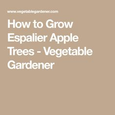 How to Grow Espalier Apple Trees - Vegetable Gardener