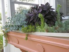 Low Maintenance Succulent Window Boxes - The Sweetest Things: May 2011