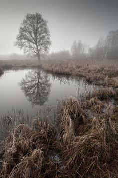 Photo Frozen fens by Lee Acaster on 500px